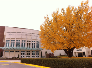 Gingko tree and concert hall